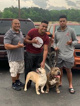 Alabama Pitbull Puppies For Sale, XL Pitbulls, XXL American